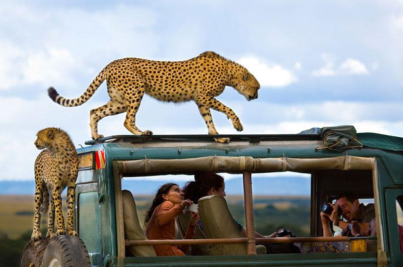Сафари по Танзании на джипах