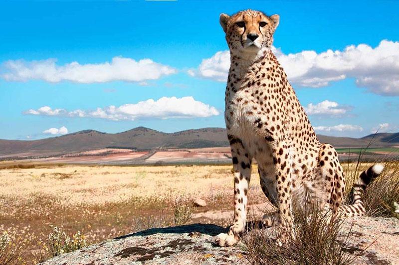 Сафари в парках Танзании - Клипшпрингер