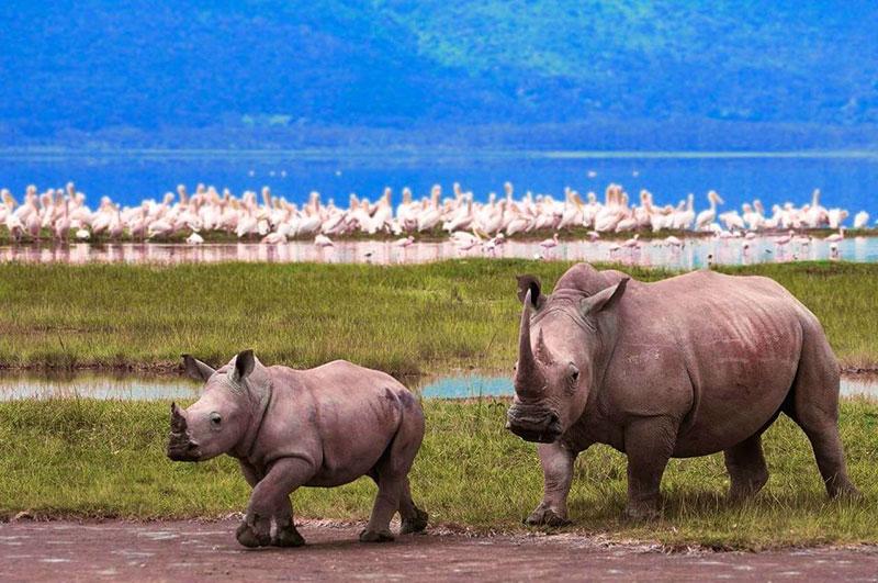 Сафари в парках Танзании - Суни